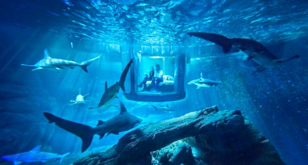 Would you sleep here?  Air BnB offers first underwater bedroom...surrounded by sharks.