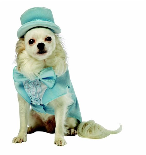 Dumb and Dumber Harry Dog Costume #88587