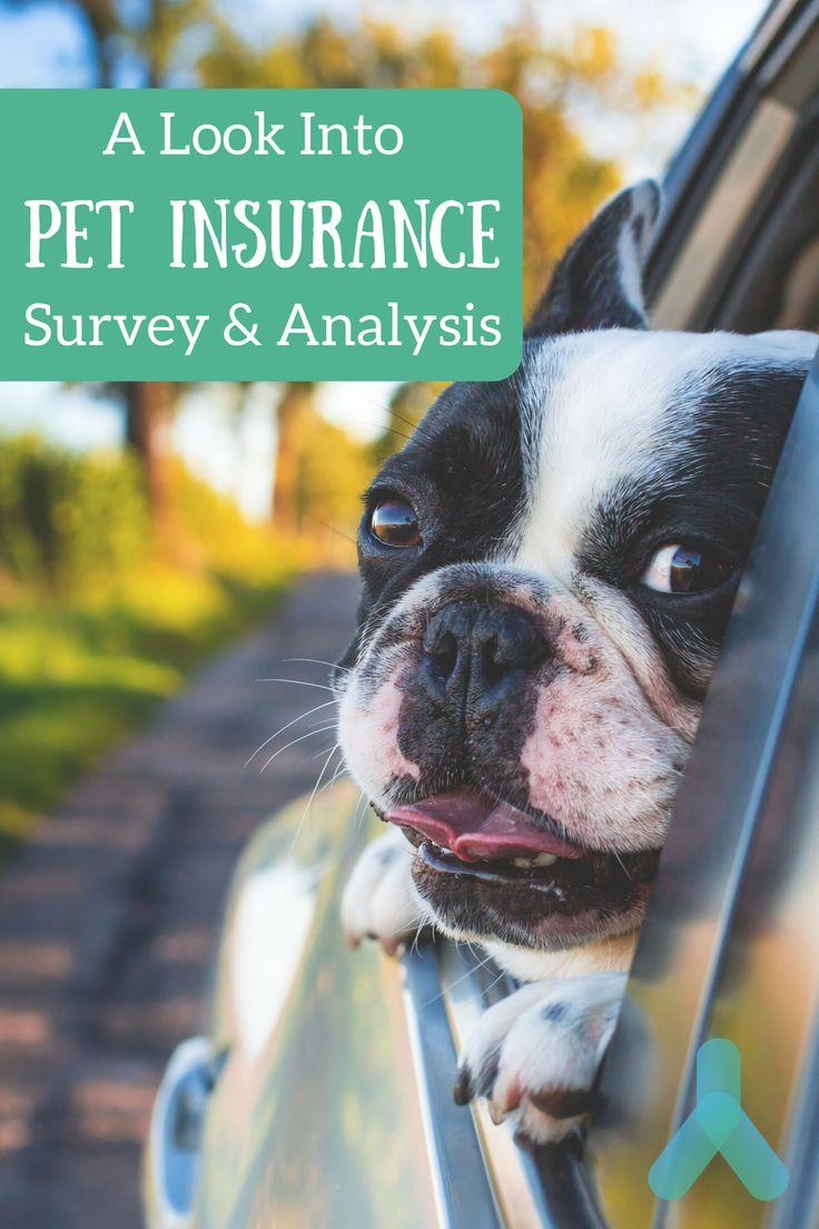 best pet insurance iowa