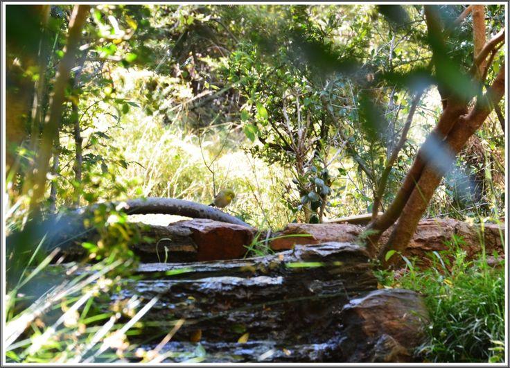 #nature at Thaba Tshwene Game Lodge