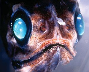 This creature's kind of freaky, but the eyes are cool. #deep sea creature