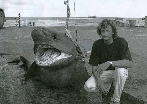 Shark sixgilled clemens rump landed the all tackle for What is the biggest fish ever caught