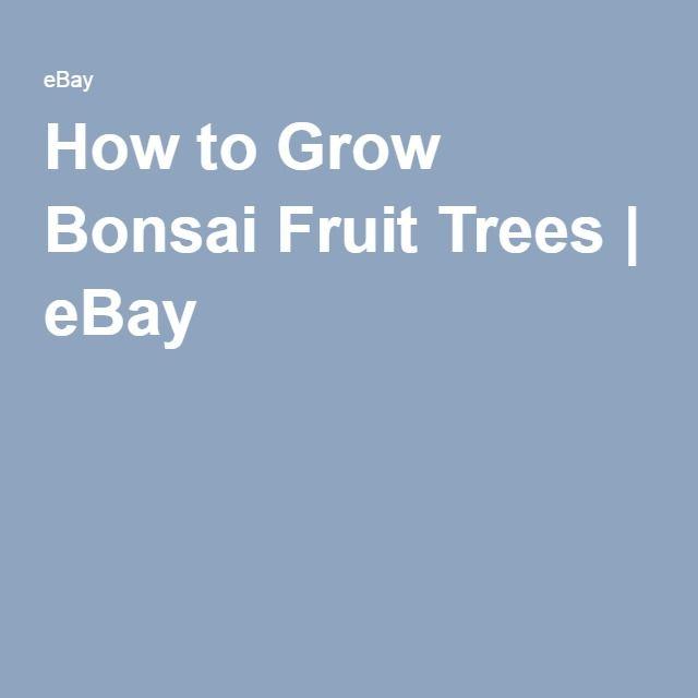 best 25 bonsai fruit tree ideas on pinterest bonsai tree near me bonsai and grow from seed. Black Bedroom Furniture Sets. Home Design Ideas