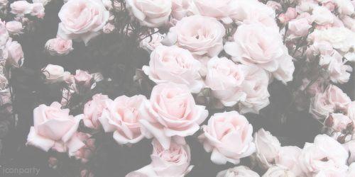 floral, header, pale, roses