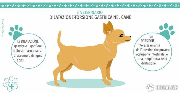 Dilatazione-torsione gastrica nel cane | Dogalize Lo stomaco gonfio nel cane può essere una vera e propria emergenza, oppure semplicemente può voler dire che il vostro cane ha mangiato troppo. Proprio perché può trattarsi anche di un sintomo di qualcosa di grave, è meglio che non facciate da soli una diagnosi: portatelo immediatamente dal veterinario, …