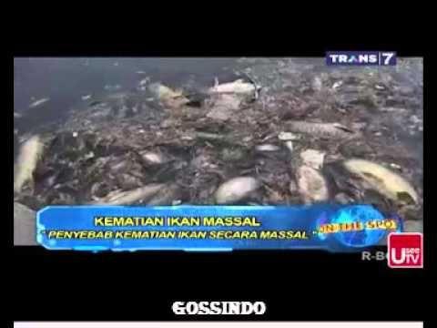 7 kematian massal ikan on the spot 14 dec 2015