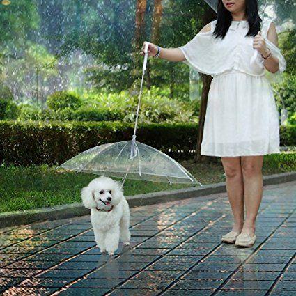 ομπρέλα για σκύλους