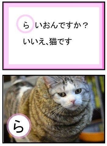 笑える猫カルタまとめ | マイナビニュース