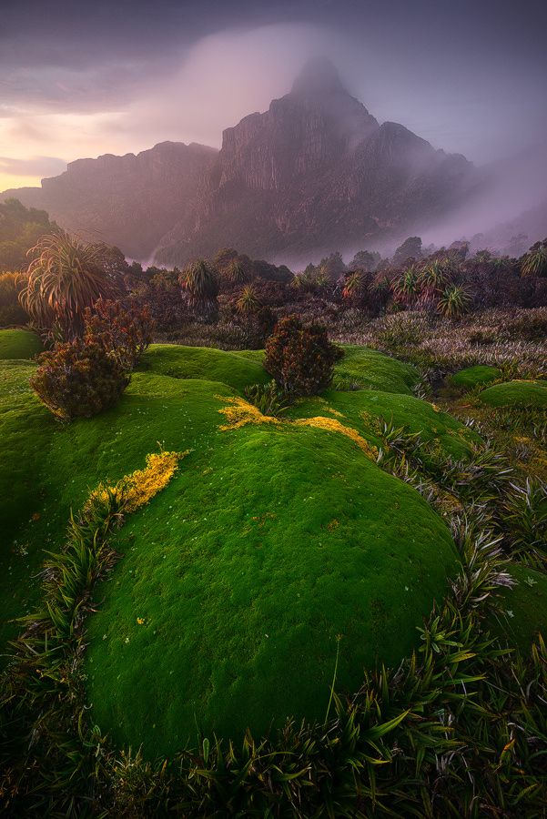 South-West National Park, Tasmania. Taken deep in the remote, snake infested wilderness of South West Tasmania. We spent 4 days camped on this alpine plateau photographing this unique and fragile environment. Also this is my first posted image from my new Sony A7R and 16-35 f/4 combo, and I have to say I'm very impressed with the quality, sharpness and dynamic range this little thing puts out!