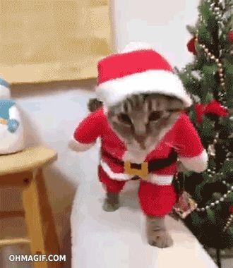 cute-santa-cat-walking-on-the-sofa