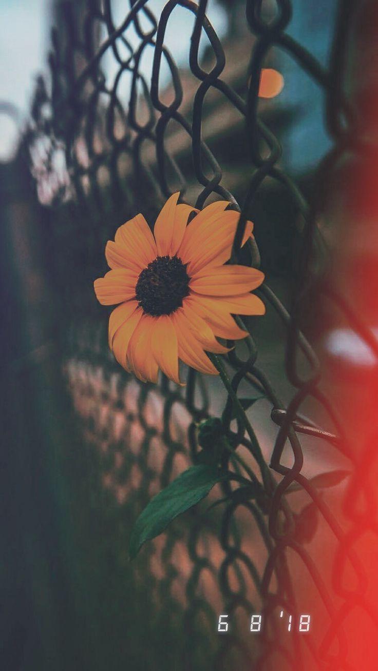 Tumblr Wallpapers – @LOVEDREAMS #Fondos – taetae…