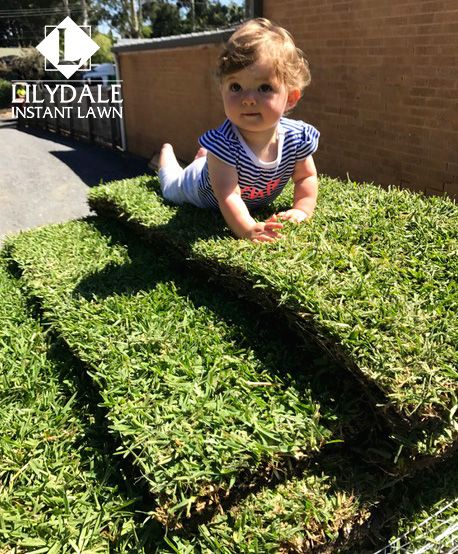 March - 2017 - Monthly Home Owners Competition Winner - Lilydale Instant Lawn Care | Love your lawn | Great grass | Lily & Dale | Follow us | Garden Tips & Advice | Contact us | Lawn Solutions Australia Lawn Supplier | Instant Turf |Sir Walter Buffalo DNA Certified | Lawn Solutions Australia | Online Store | Local Pick up & Delivery | Lawn Care | Turf Farm | Melbourne | Victoria | Garden | Grass