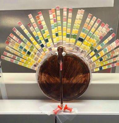 Strip Test Turkey                                                                                                                                                                                 More