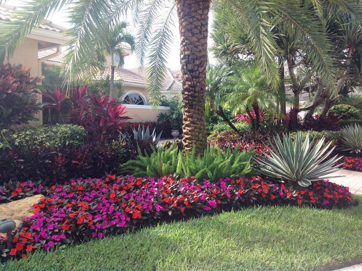 Landscaping With Ferns : New guinea impatiens accent the foxtail ferns and agave