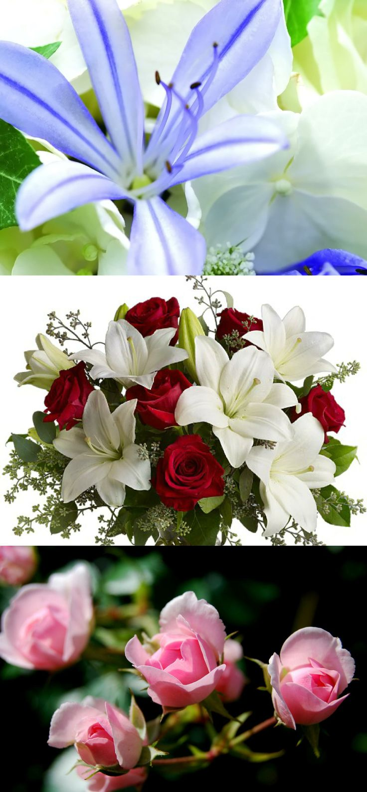 42 best online flower delivery in india images on pinterest online flowers for my lady friends on dn izmirmasajfo