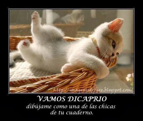 Amor de cachorro simpático | Gatitos Simpaticos Con Pensamientos Positivos | imagenes para Comentar ...