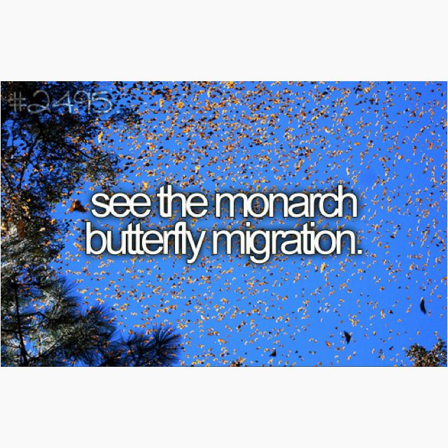 Does a monarch breeding tent count? I remember the people who protect them bring a tent full of monarchs at my private school - pretty cool!