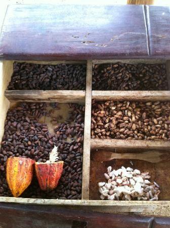 Rainforest Chocolate Tour - La Fortuna de San Carlos, Costa RIca