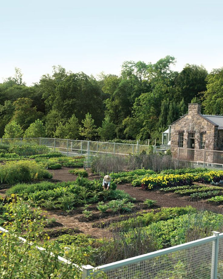 From early spring to fall's first frost, Martha's vegetable garden yields not only delicious crops but also clever and innovative techniques. Take a peek at Martha's garden in all its glory.