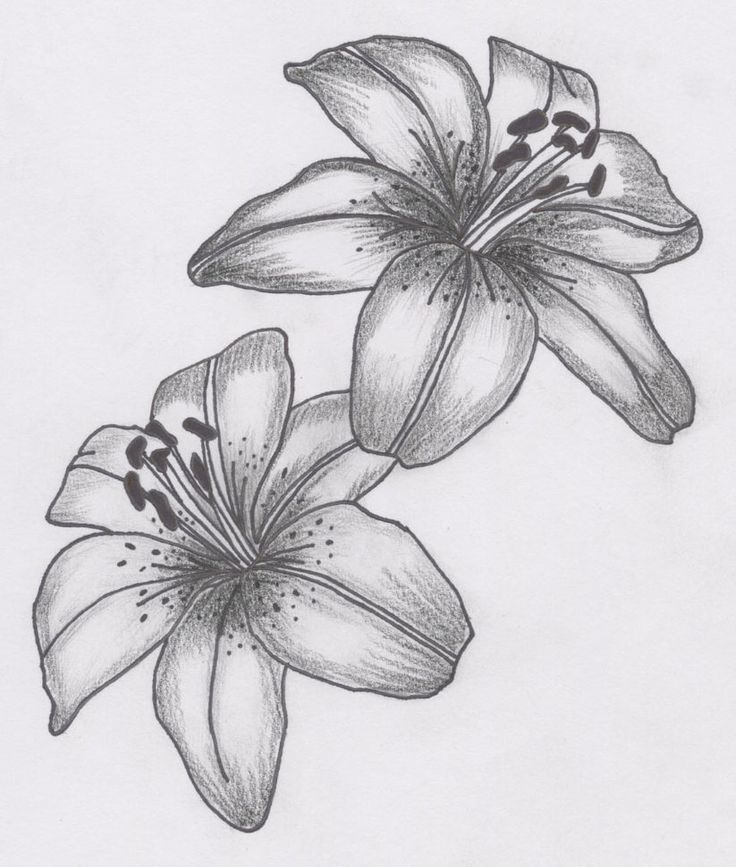 tatto flower drawings | For Tattoos Lily Flower Tattoo Designs Can - Free Download Tattoo ...