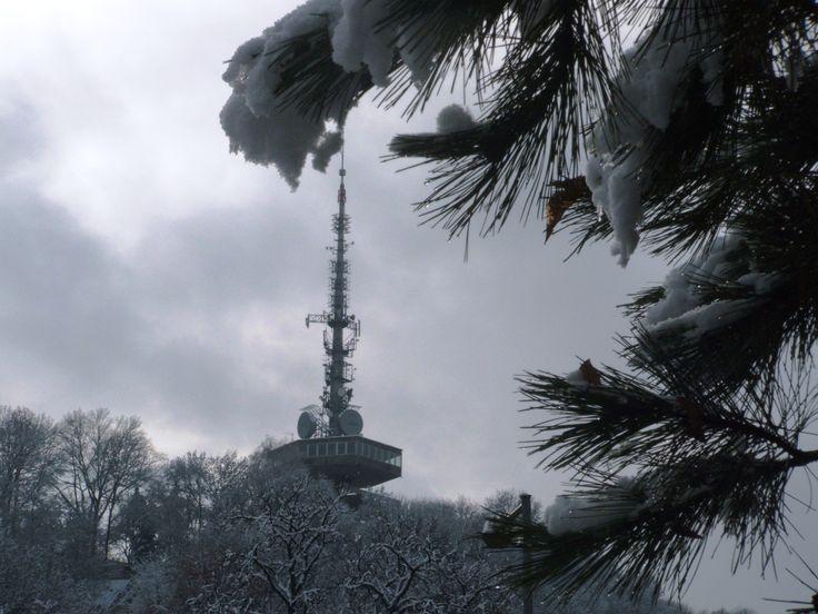 A kilátó / the lookout tower.  Fotó: Kupcsik Sarolta