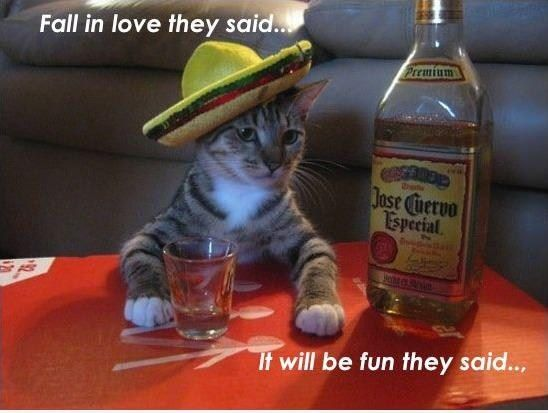 Friends, Tequila, Cincodemayo, Funny Cat, Mexicans Parties, May 5, Funny Animal, Jose Cuervo, Drinks