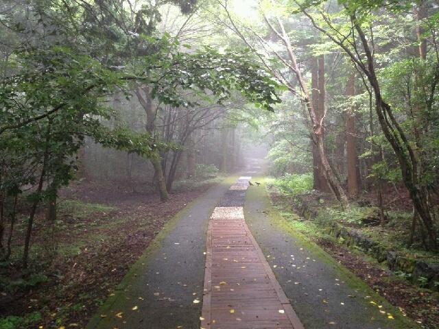 [한라산] 비가 오고 난 뒤 아침안개가? 살짝 내려앉은 서귀포자연휴양림의 신비로운 모습입니다. #문자 오치범 님