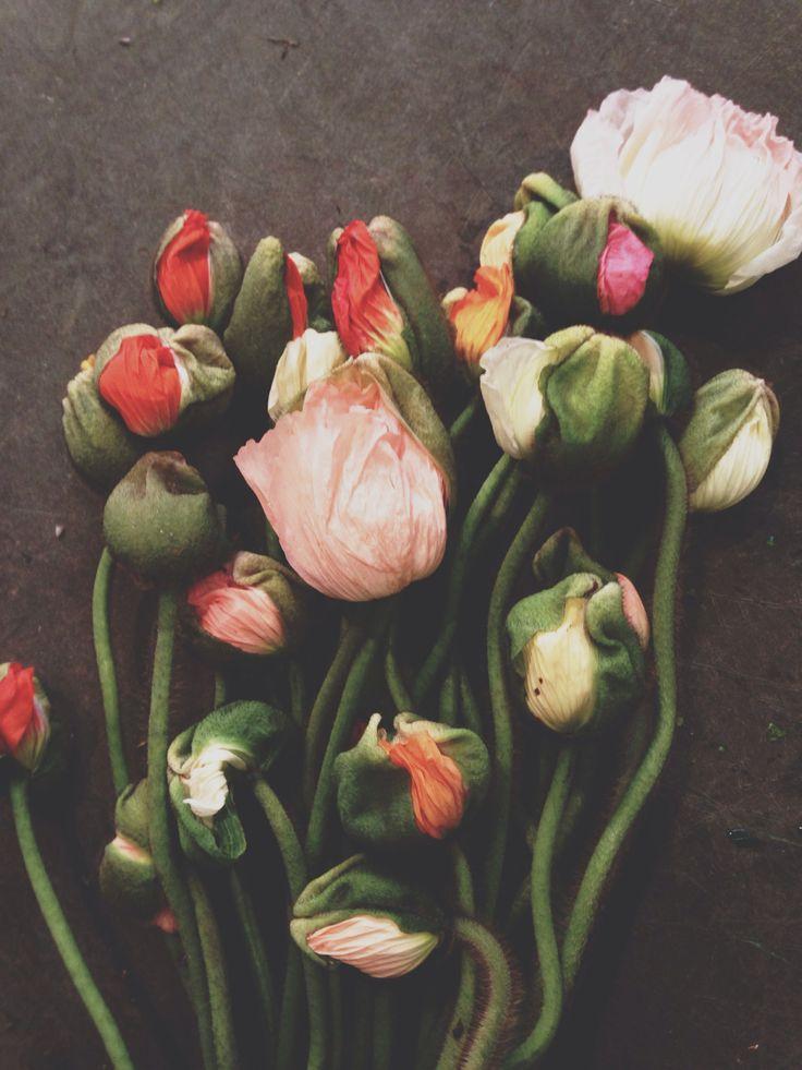 Poppies Christoffers blommor