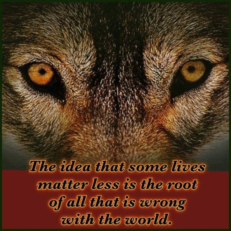 Wolves...If more people could see how true this is. It's not only some lives matter, ALL lives matter. Every single living breathing being.: