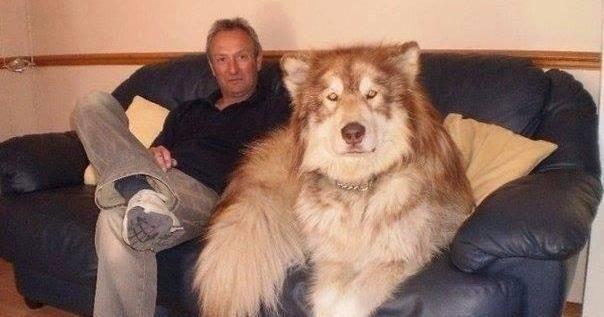 ¡Mira estas fotos de perros descomunales!