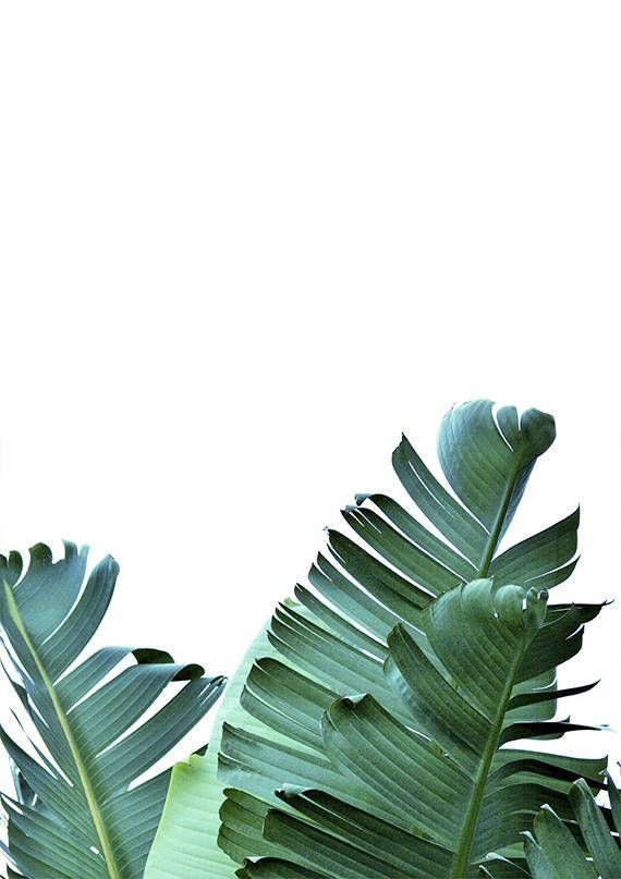 Botanical Print Palm Leaf Print Tropical Decor Plant