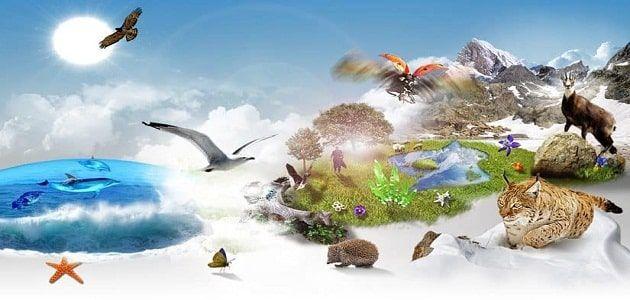 بحث عن التنوع الحيوي والمحافظة عليه كامل Biodiversity Conservation Fish Pet Biodiversity