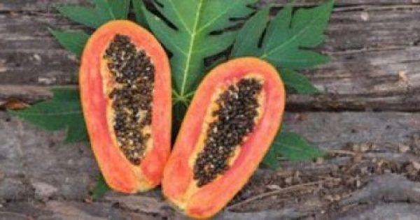 Οι τροφές και τα βότανα που σκοτώνουν τα εντερικά παράσιτα