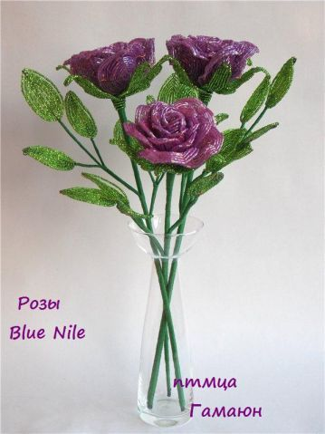 "Розы  ""Голубой Нил ""(Blue Nile)"