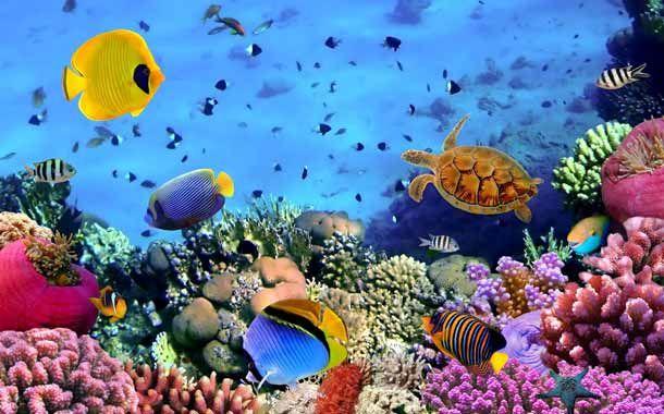 Corales marinos, coloridos organismos animales y vegetales, algas unicelulares, cnidarios, cómo se forman los corales marinos, de qué se alimentan y viven