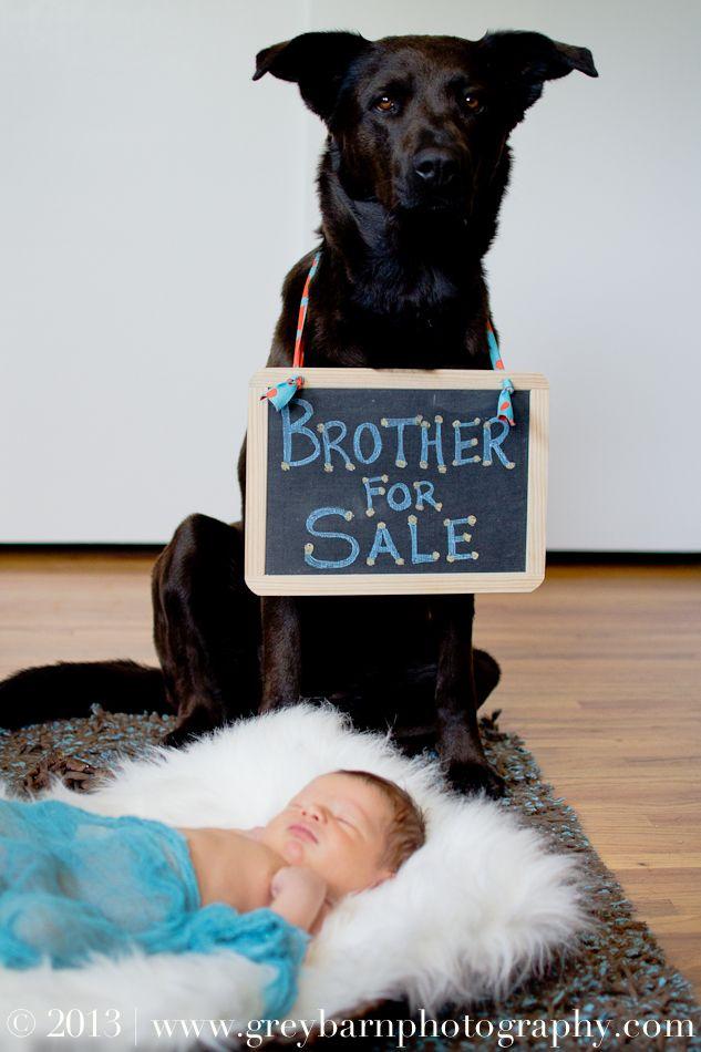 best 25  dog baby announcements ideas on pinterest