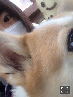 チップとおばけパン とひなこ   乃木坂46 北野日奈子 公式ブログ