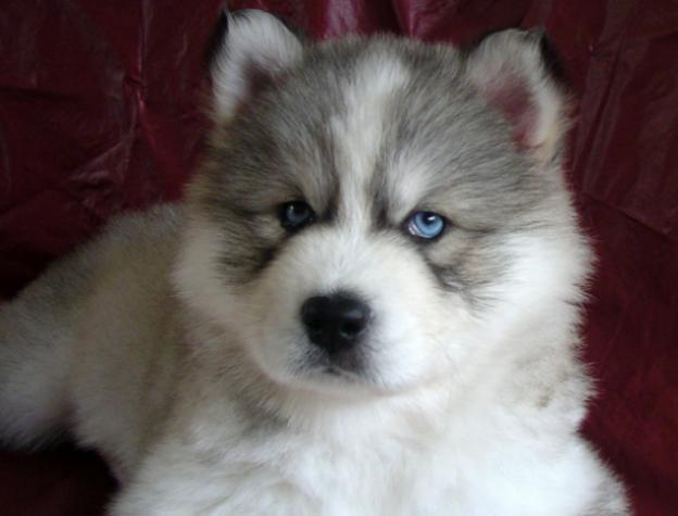 Awwweehhhh! He's tubbbyyy :D want a puppy do badd!