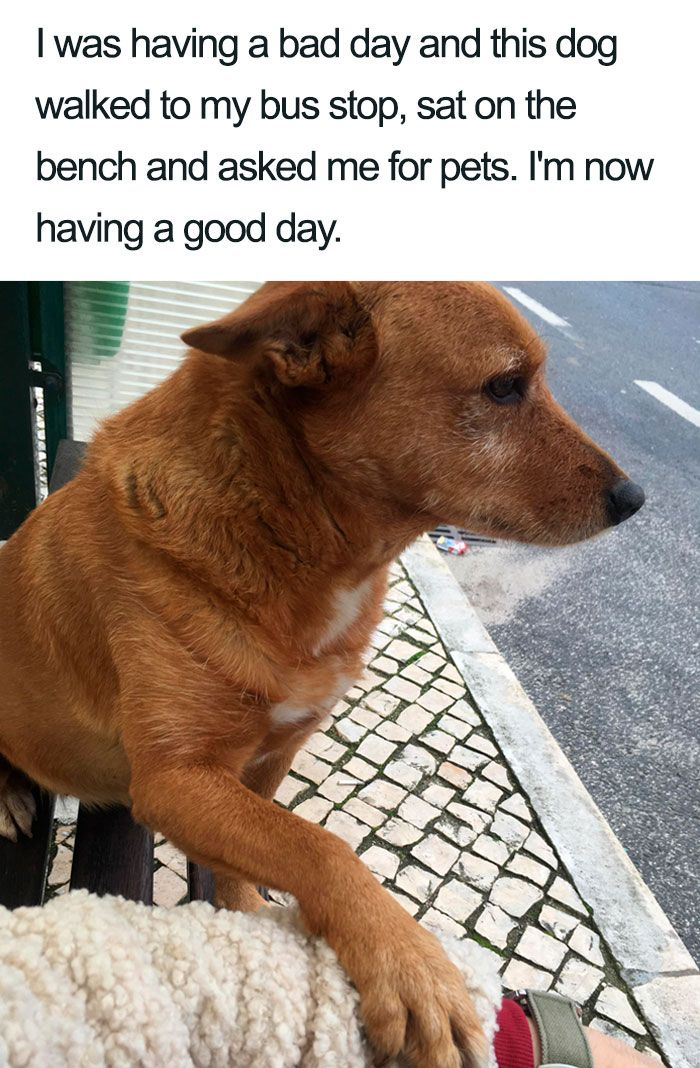 30 Wholesome Dog Posts That Will Hopefully Make Your Day New Pics