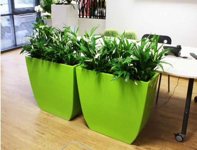 1000 images about indoor office plants on pinterest indoor red plants and office plants - Indoor desk plants ...