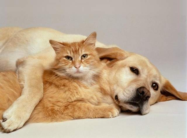 Fleas, squirrel chasers and clingy cats