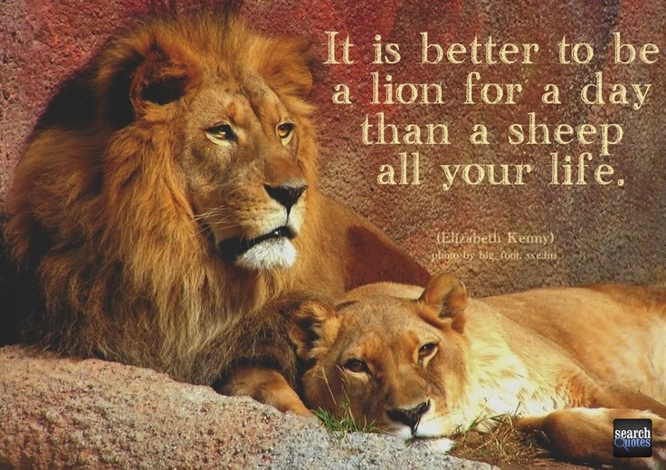 Lion Sheep Life For more quotes visit www.searchquotes.com ...