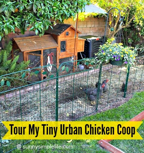 Tour Of My Tiny Chicken Coop | small chicken coop | premade coop | backyard chickens | urban chickens | raising chickens in a very small backyard can be done