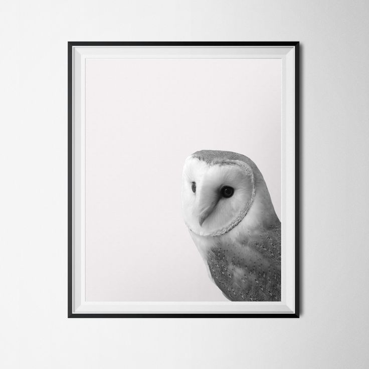 Owl print forest creature poster barn owl instant download black and white photography 16 x 20 po