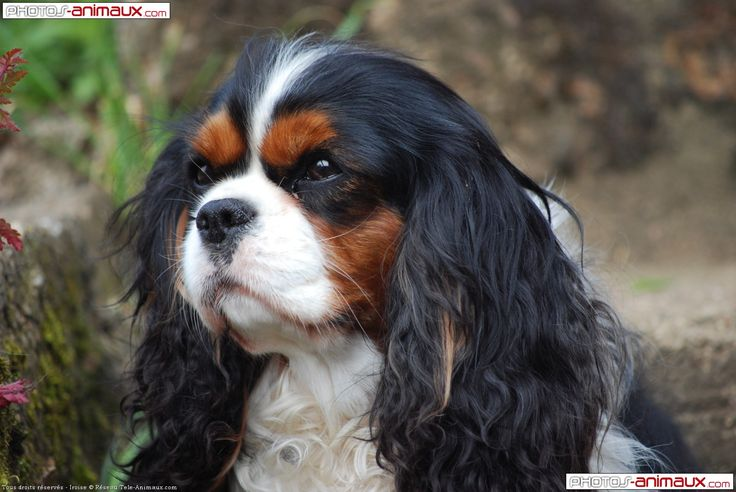a pic from the web...i do not knnow the owner or breeder