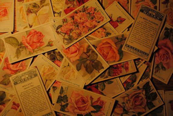"46 wills cards roses series from 1912   size: 1 1/2"" x 2 3/4""  wonderful picture on one side and then the name and description on the other   great paper ephemera  perfect for scanning, framing, enjoying and learning......so charming.........    History of W.D. & H.O. Wills    W.D. & H.O. Wills was a British Tobacco importer and cigarette manufacturer formed in Bristol, England. 1912 roses WILLS cards cigarette cards 46  by lettuceTURNIPtheBEET, $75.00"