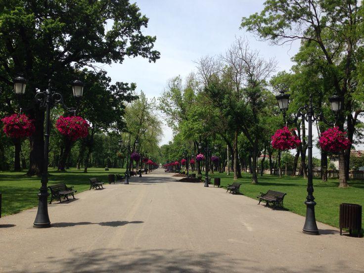 Mogosoaia park