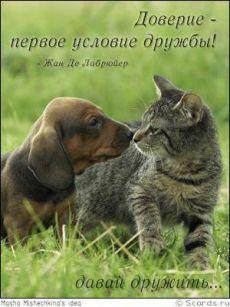 Истинная дружба должна быть откровенна и свободна от притворства и поддакивания. (Цицерон Марк Туллий)
