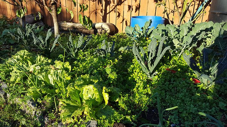 The garden may be looking a bit empty at this time of the year but there is plenty to do in preparation for the coming season.  Clear out and weed garden beds that are not in use and prepare them for next
