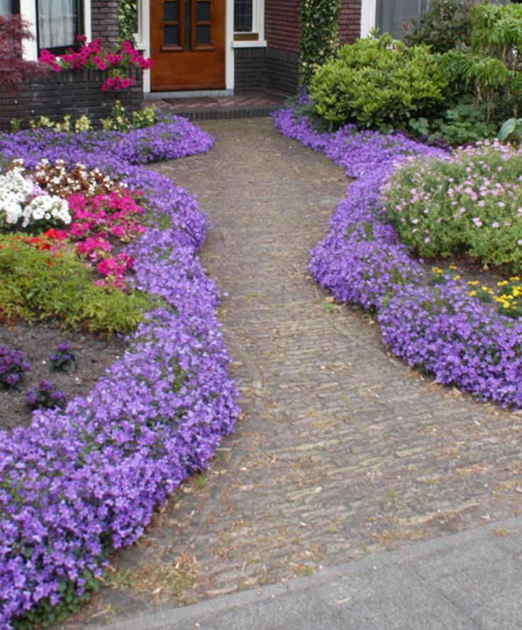 Garden Ideas Borders 25+ best border plants ideas on pinterest | driveway landscaping